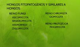 HONGOS FITOPATÓGENOS Y SIMILARES A HONGOS