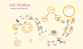 Copy of Cell Division: Meiosis and Mitosis