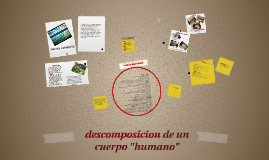 "Copy of descomposicion de un cuerpo ""humano"""