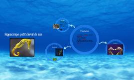 Hippocampe: petit cheval de mer