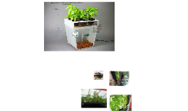 Aquaponics: An Emerging New Agricultural Technolgy