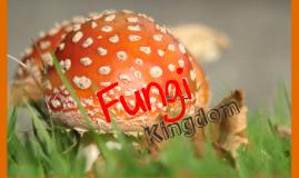 Copy of Fungus