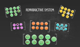 Copy of reproductive (bernice)