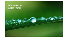Adaptation in Water Plants