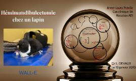 Hémimandibulectomie chez le lapin