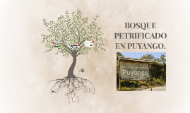 Bosque Pretrificado en Puyango