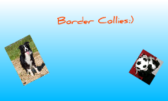 Border Collies:)