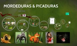 HUGO MORDEDURAS Y PICADURAS