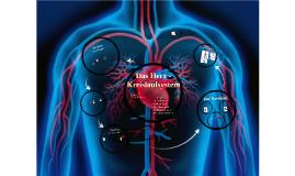 Herz und Kreislaufsystem