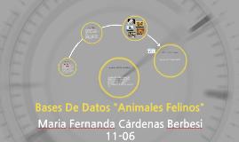 """Bases De Datos """"Animales Felinos"""""""