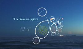 Copy of Immune System