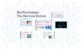 Bio-Psychology: The Nervous System