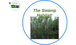 The Swamp Habitat!