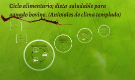 Ciclo alimentario; dieta  saludable para ganado bovino. (Ani