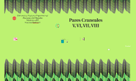 Pares Craneales V, VI, VII, VIII
