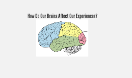 How Do Our Brains Effect Our Experiences?