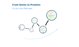 Copy of From Genes to Proteins