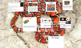 The milk snake