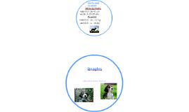Hunde: Beagles