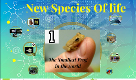 The Smallest Frog in the world
