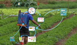 Copy of Projeto Perícia de Resíduos Agrotóxicos em Alimentos