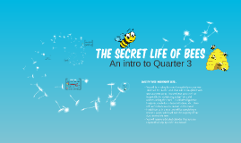 2017 Q3 Intro: The Secret Life of Bees