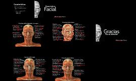 Anatomía Cara y Cuello