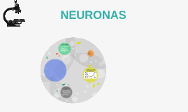 Copy of NEURONAS