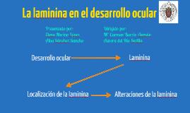 Copy of Laminina en el desarrollo ocular