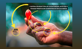 CADENA PRODUCTIVA DE OLEAGINOSAS, ACEITES Y GRASAS VEGETALES EN COLOMBIA