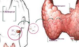 Copy of Copy of Хашимотогийн тириодитийн үед бамбай булчирхайн хэвийн бүтэц
