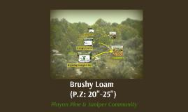 Brushy Loam - Pinyon/Juniper
