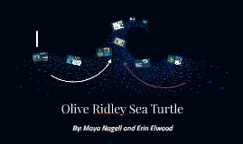 Endangered Species: Olive Ridley Sea Turtle