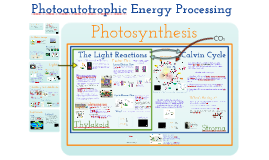 Photoautotrophic Nutrition
