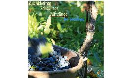 Krankheiten, Schädlinge, Nützlinge im Weinbau