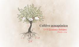 Cultivo acuapónico