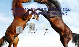 Copy of aparato reproductor del equino