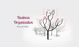 IB Business: Types of Organization