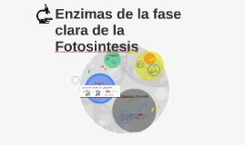 enzimas de la fase clara de la fotosintesis