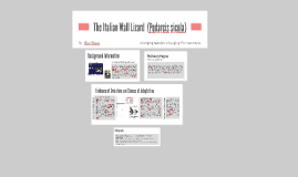 The Italian Wall Lizard