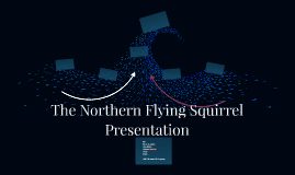 The Northern Flying Squirrel Presentation