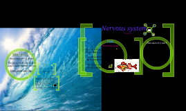 Fish and Vertebrates