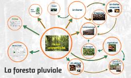 Copy of La foresta pluviale