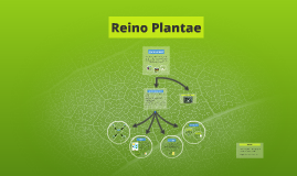 Copy of Reino Plantae