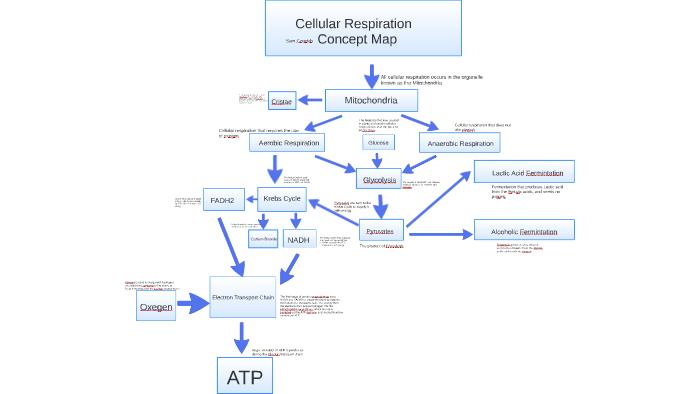 Cellular respiration Concept Map by julie cozzie on Prezi on