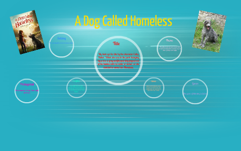 A Dog Called Homeless By Alyssa Mccaffrey On Prezi