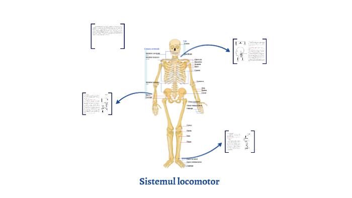 Sistemul locomotor si miscarea