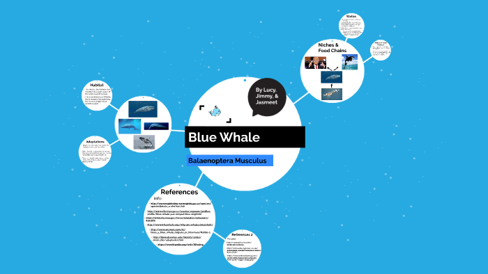 Blue Whale by Jasmeet Sandhu on Prezi