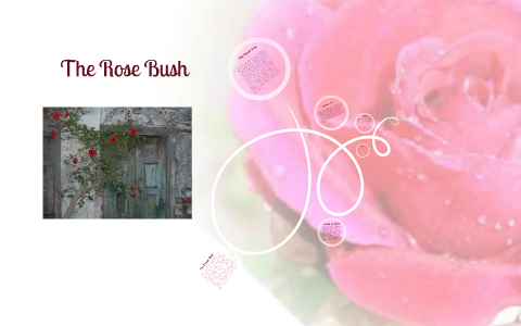 The Scarlet Letter- Rose bush by Katie Snyder on Prezi
