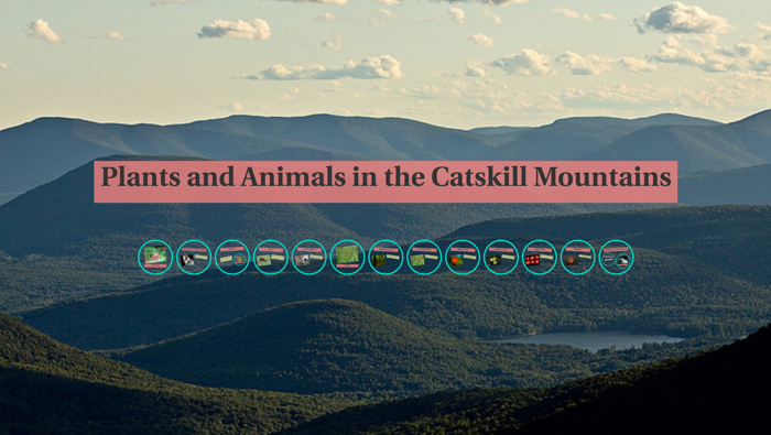 Plants and Animals in the Catskill Mountains by Cory